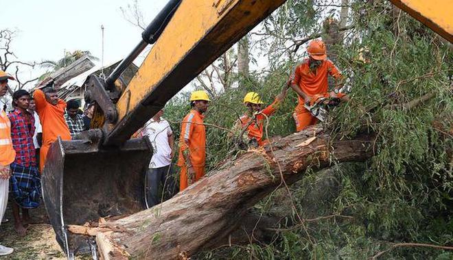 Image result for gaja trees fallen
