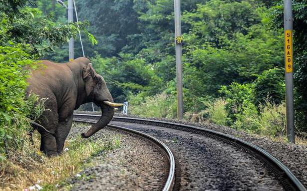 Elephant escapes after brushing against goods train near Coimbatore