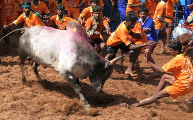 Jallikattu peps up Pongal festivities, Australian Open and other news in pictures