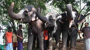 Bonding time for three elephants at Tamil Nadu's Thekkampatti rejuvenation camp