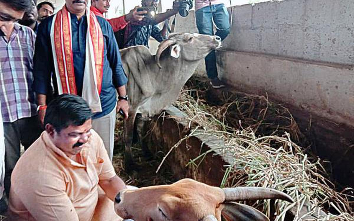MLA sees conspiracy behind cow deaths - The Hindu