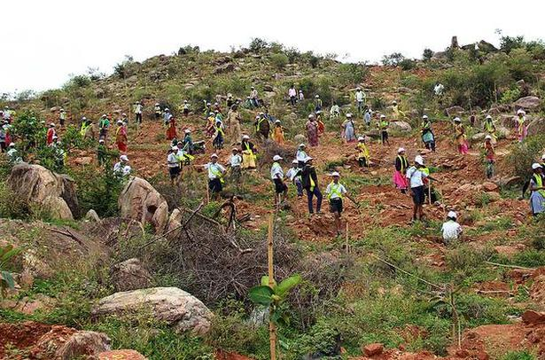 Learning by greening a hill - The Hindu