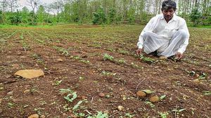 Zero budget organic farming quite a difficult proposition