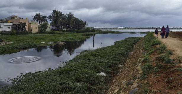 Dark matter: The Narasapura lake, where vestiges of the sewage pumped are still visible.