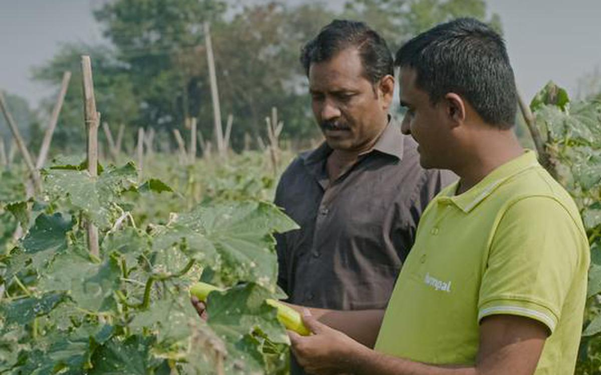 Maharashtra Startup Makes Agriculture Beneficial For Both Farmer And Consumer The Hindu