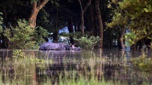 Assam floods: Why we need to act fast to save Kaziranga and its wildlife