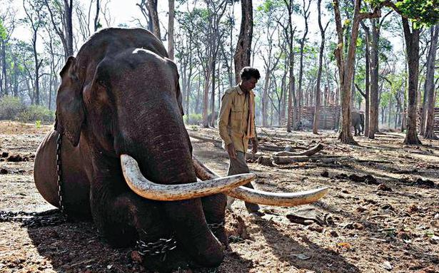 Elephants In The Coffee: Documentary looks at human-animal conflict in Karnataka