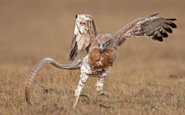 Chennai birder's photo commended by London's Natural History Museum