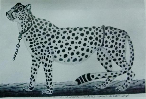 A painting of Tipu Sultan's hunting cheetah.