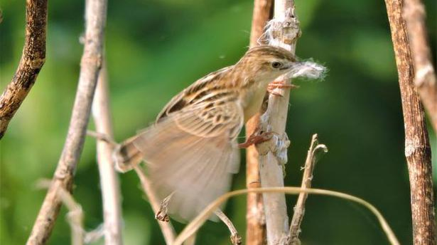 Madras Bird Race is back, and over 100 bird species await
