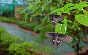 Soon, more butterflies will flutter around at the Butterfly Park in Visakhapatnam zoo
