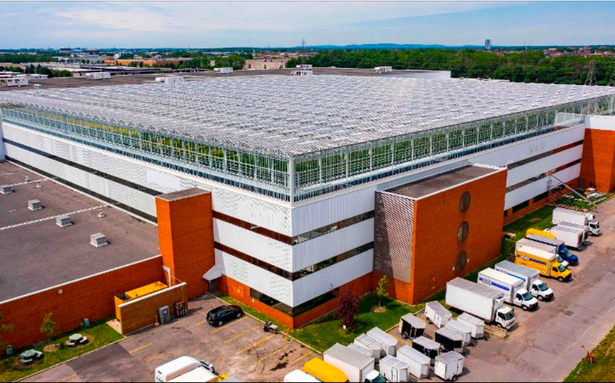 Watch | World's largest rooftop greenhouse opens in Montreal