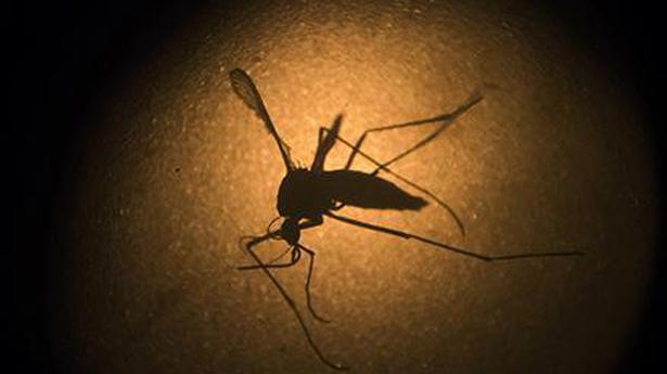 Indian firm's zika virus vaccine 100% efficient in animal trials.