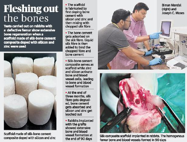 IIT Guwahati's bone graft aids extensive bone formation