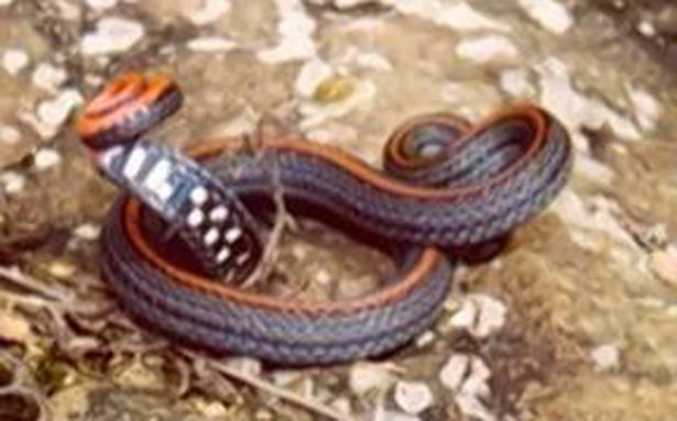 Don't judge a snake by its colour