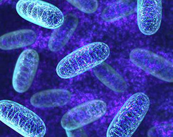mitochondria immigrants that add power to the mother s cells the
