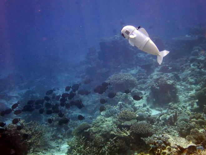 new robot fish from mit to study ocean life the hindu