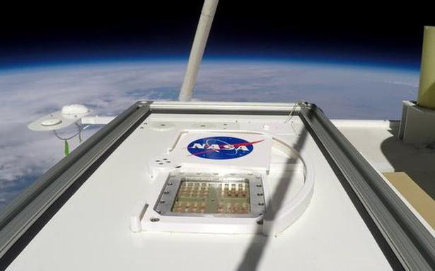 Microbes from Earth could temporarily survive on Mars: study - The Hindu