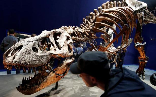 T. Rex walked slower than previously thought: study