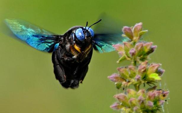 The best from the science journals: Bees of the world, Unite!