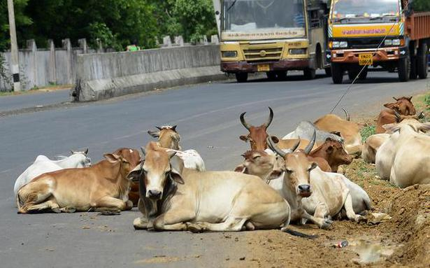 Mob thrashes man suspected of slaughtering cow in Jharkhand