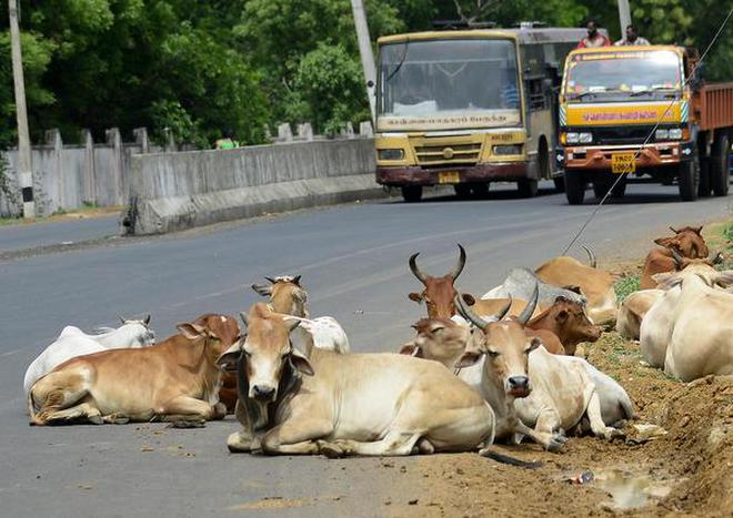 Panel moots UID numbers for cows