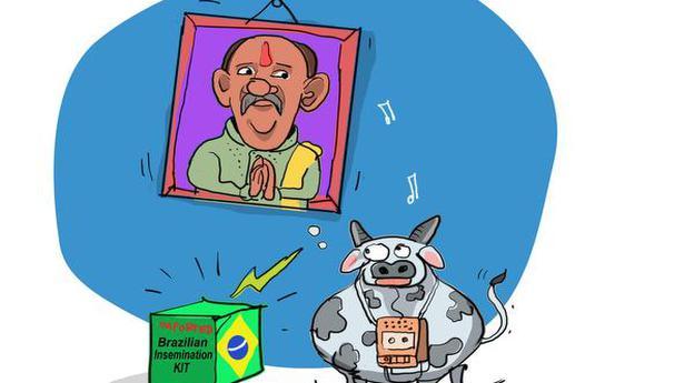 Brazilian husbandry