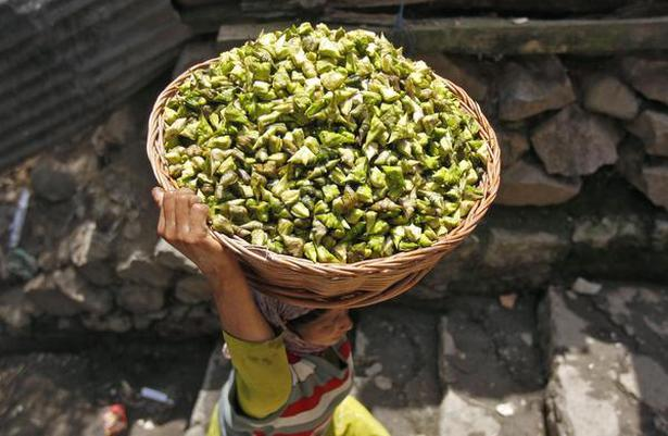 A Kashmiri village woman carries a basket filled with water chestnuts