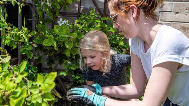 Home gardening blooms around the world