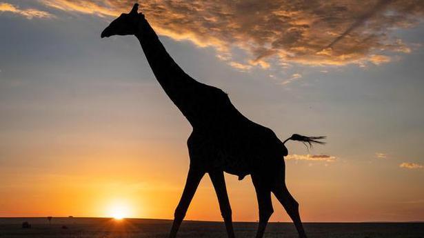 New light on rise of mammals - The Hindu