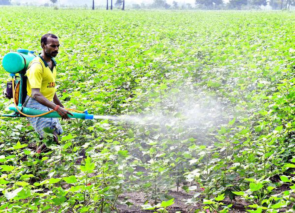 A farm worker sprays pesticide in a cotton farm at Muthanampatti near Dindigul.