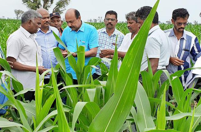 Agriculture Department officials conducting an awareness campaign on ways to control Fall Armyworm at a maize field at M. Kannanur in Pullampadi taluk in Tiruchi district.