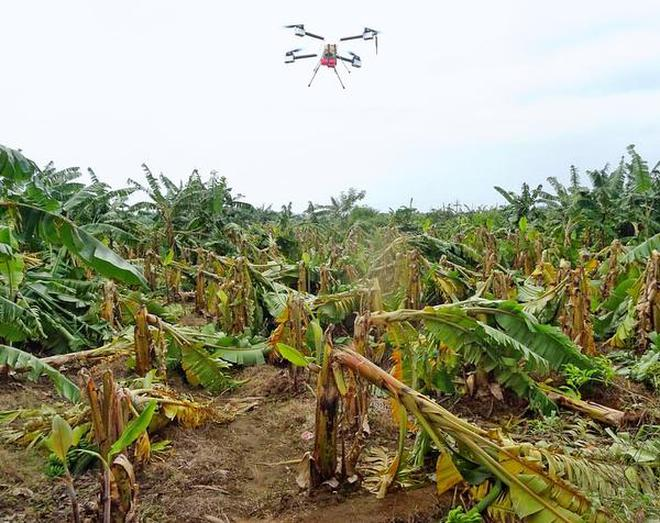 An Unmanned Aerial Vehicle deployed by the Tamil Nadu Agricultural University assesses extent of damage caused to banana plantations in Lalgudi block in Tiruchi.THEHINDUHANDOUT